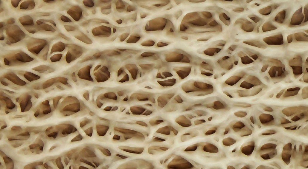 collagen structure