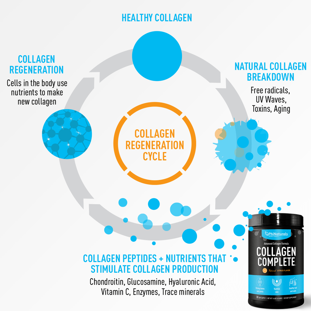 collagen regeneration cycle